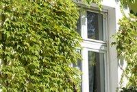 Begrünte Hausfassade mit wildem Wein (Quelle: Helge May für Nabu)