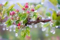 Frostschutzberegnung bei Apfelblüte Quelle: www.diesuedtiroler.it